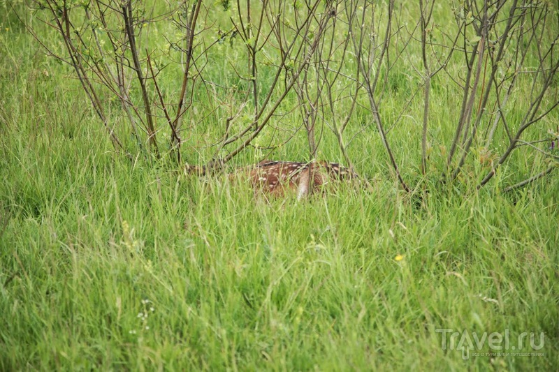 Посещение оленьей фермы летом / Россия