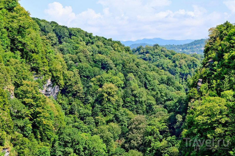 Склоны Ахуна покрывают реликтовые тисовые леса