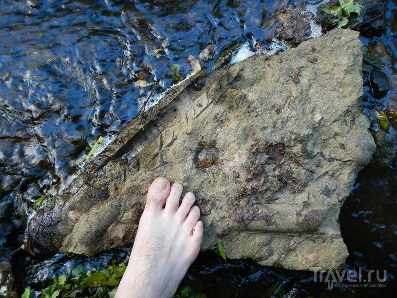 Каньон леки Лавы. Трилобиты и водопад / Россия