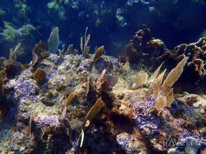 Подводный мир у берегов Варадеро очень красив.