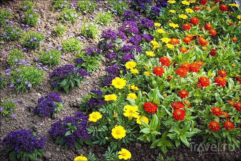 Океан цветов на острове Майнау / Германия