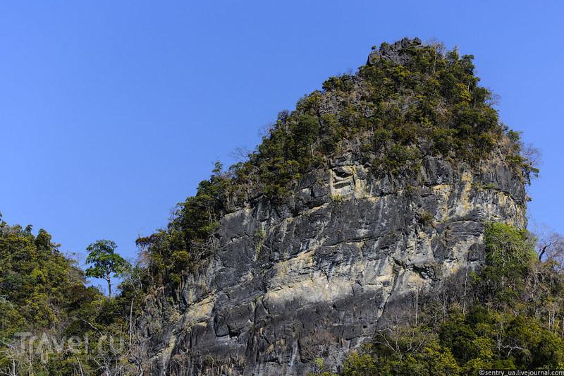 Мангровые леса Лангкави / Малайзия