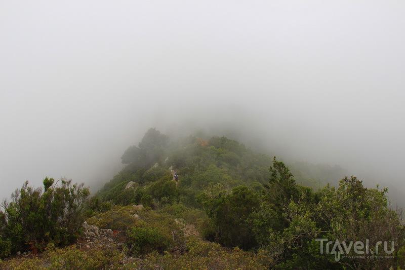 Тенерифе. Бросай курить - вставай на лыжи / Фото из Испании
