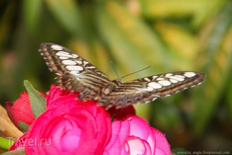 Самые красивые бабочки Вены живут здесь! / Австрия
