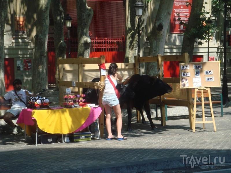 Бег быков в Памплоне (Сан-Фермин) / Испания