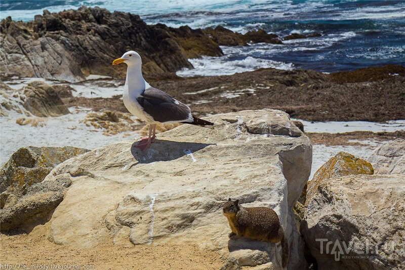 Зоопарк на берегу Тихого океана / Фото из США