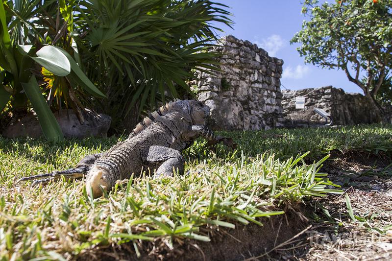 Мексика. Постройки Майя. Взгляд с квадрокоптера / Мексика