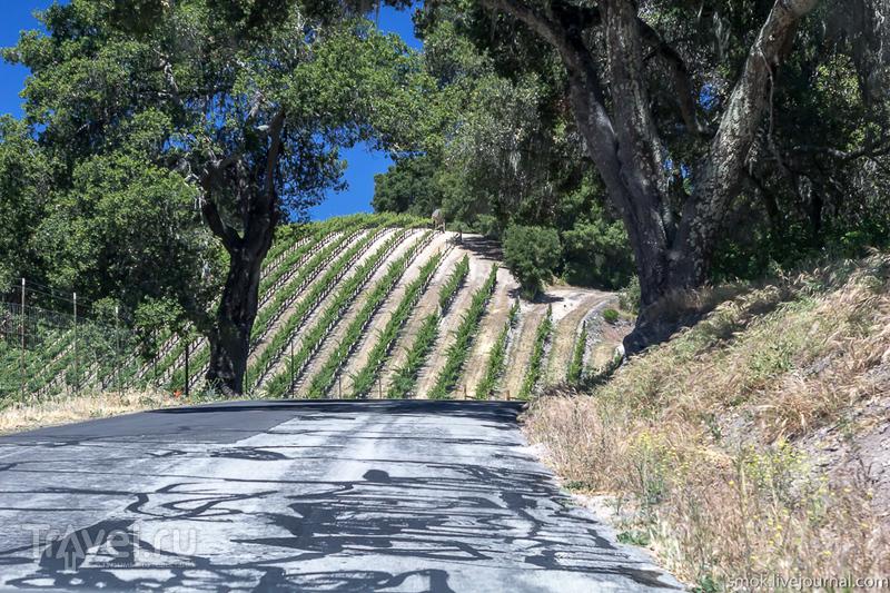 Винодельни Paso Robles в Калифорнии, немного пляжа Santa Cruz / США