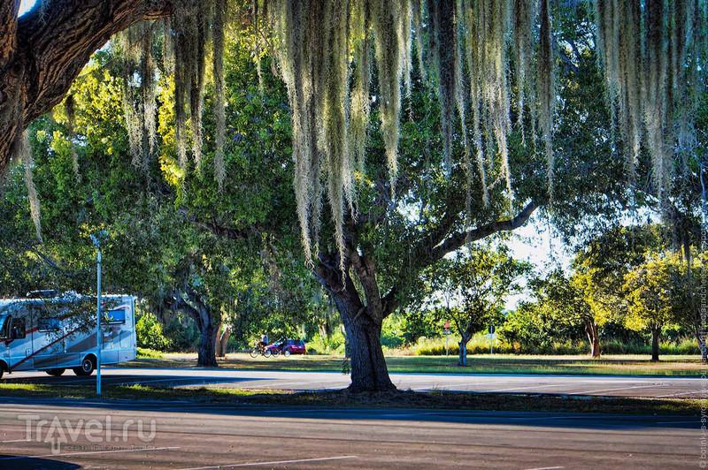В болоте жить не так уж плохо - Парк Эверглейдс, Флорида / Фото из США