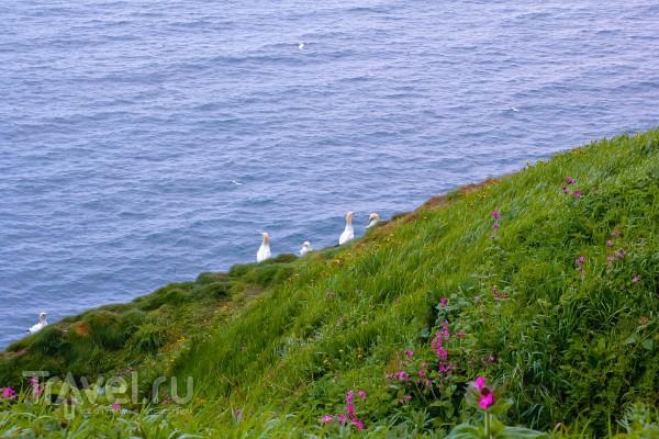 Bempton Cliffs - птичий заповедник в Йоркшире / Великобритания