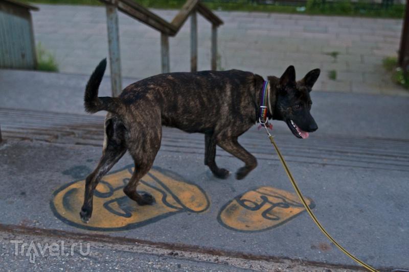 С псом за границу, или Собаки тоже люди, им тоже нужны документы / Литва