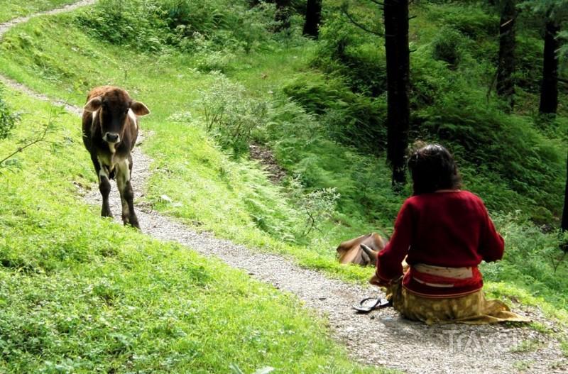 Найнитал. Совсем другая Индия / Индия