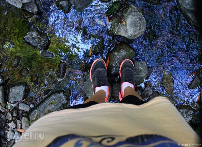 Калифорния: бирюзовые виды Armstrong Redwoods / Фото из США