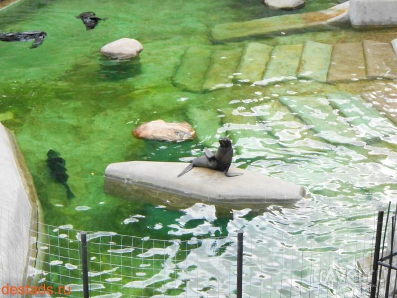 Московский зоопарк / Россия