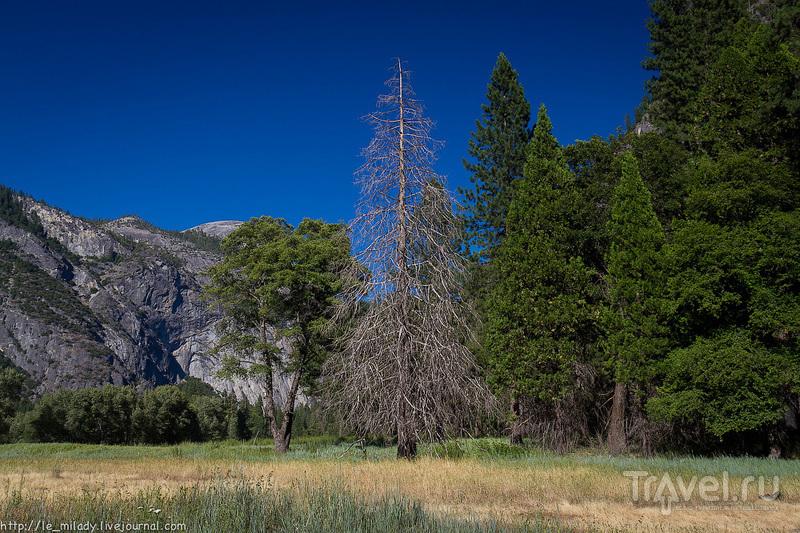 Йосемити: парк тысячи озёр и рек / Фото из США