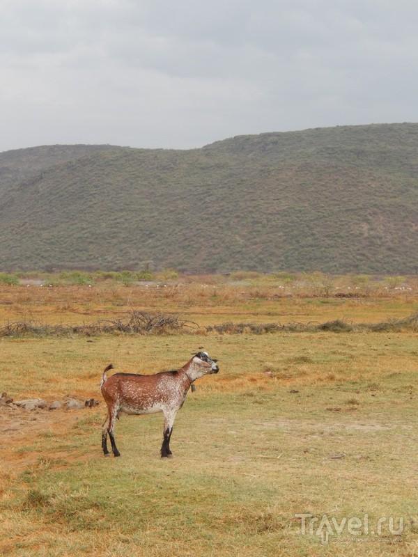 Кения, озеро Богория / Кения