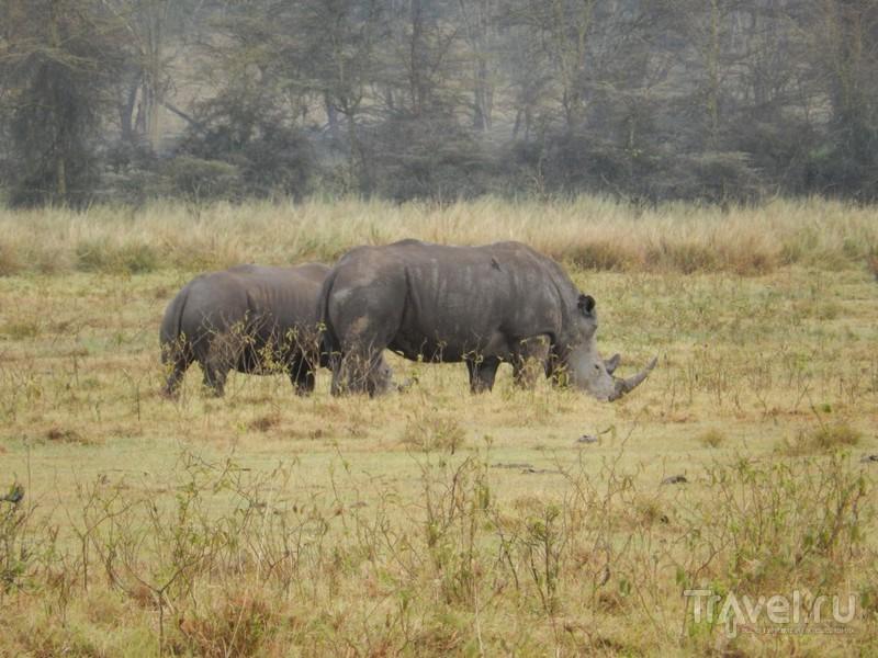 Кения, Накуру / Кения