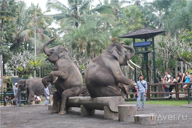 Покорми слона! / Индонезия