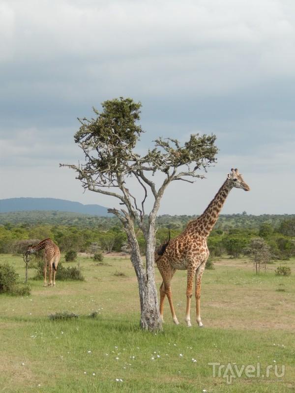 Кения, Масаи Мара / Кения