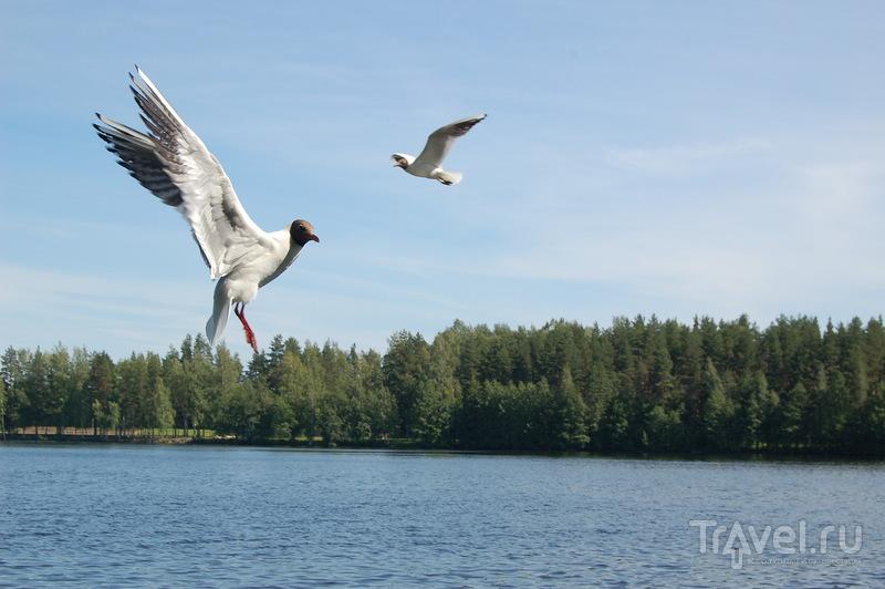 Финляндия: Иматра / Фото из Финляндии