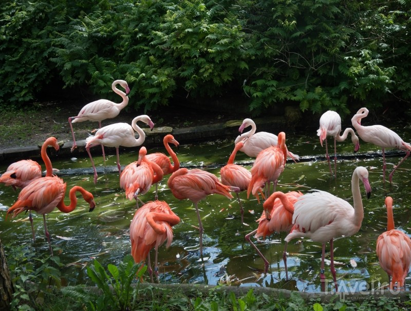 Обитатели Рижского зоопарка / Фото из Латвии