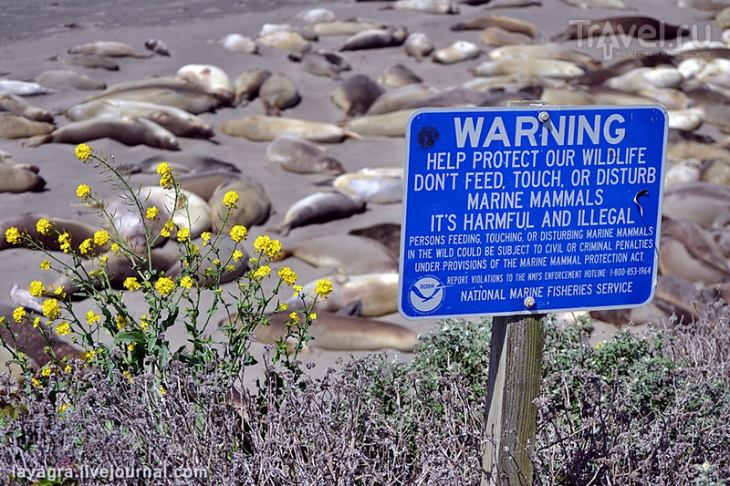 Дорога Nr. 1 Калифорнии - Тихий океан, маяки и морские львы / Фото из США