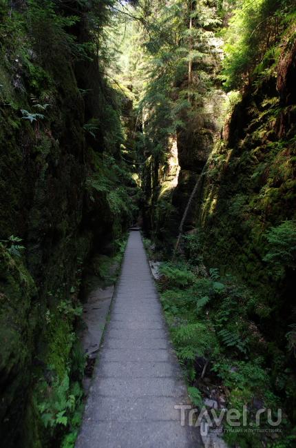 В саксонской Швейцарии / Фото из Германии
