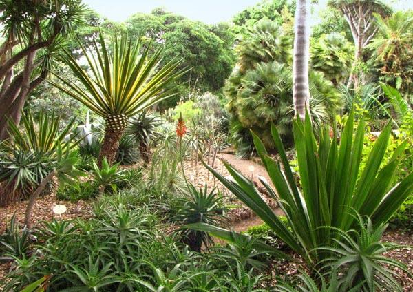 В Ботаническом саду в Пуэрто-де-ла-Крус