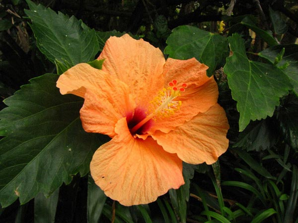 Цветок из Ботанического сада на Тенерифе