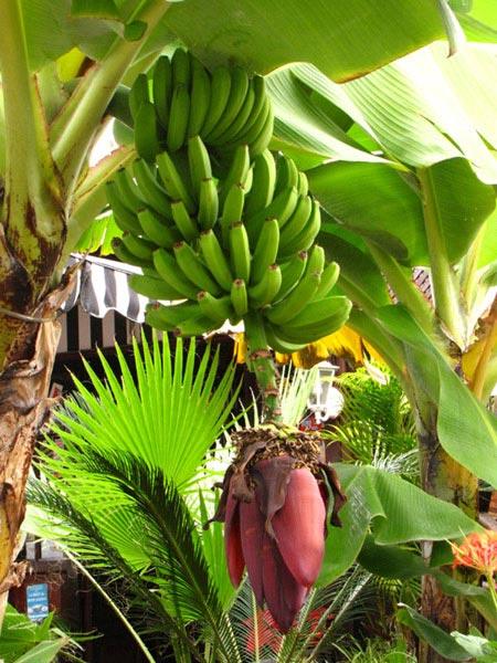 А вокруг раскинулись огромные банановые плантации