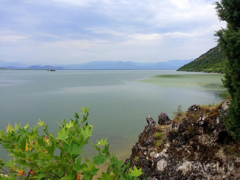 Вид на Скадарское озеро с пляжа / Фото из Черногории