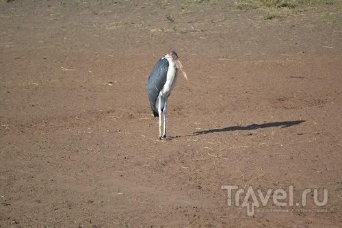 Самостоятельное сафари в Танзании. Серенгети. По деревням Танзании / Танзания