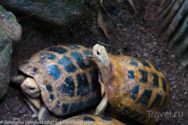 Таиланд. Пхукет. Зоопарк / Таиланд