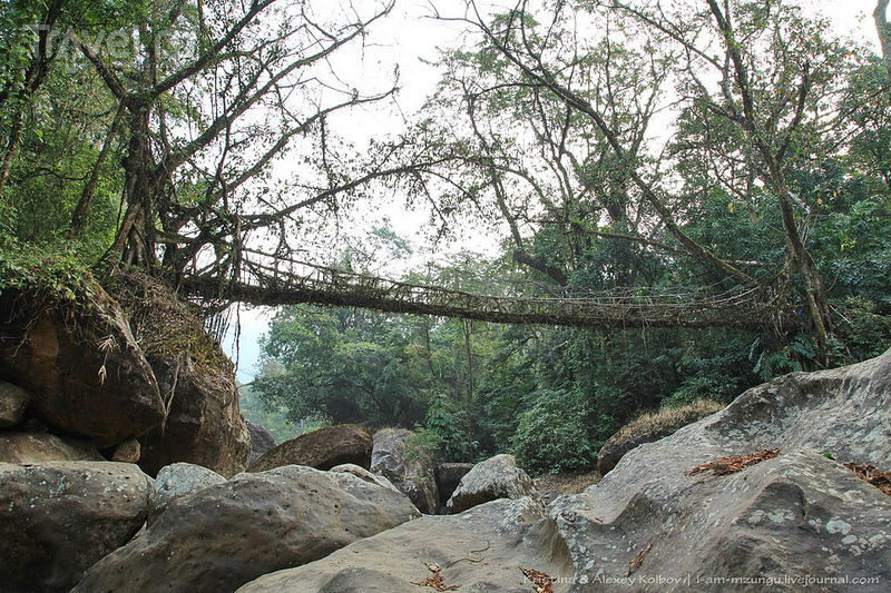 Живые мосты Черрапунджи. Между Мокшей и Нирваной / Фото из Индии