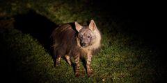 Ночные экскурсии проводятся в зоопарке Праги