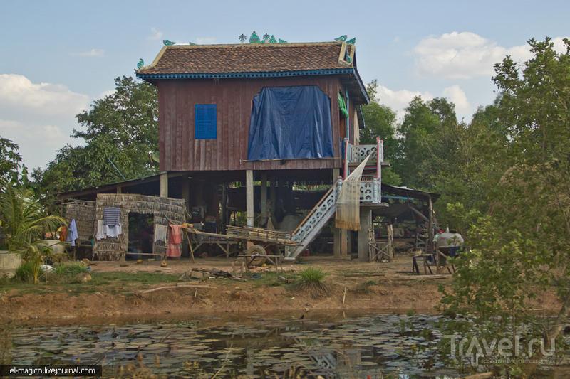 Камбоджийская гастрономия: тарантулы, личинки, кузнечики и жуки / Фото из Камбоджи