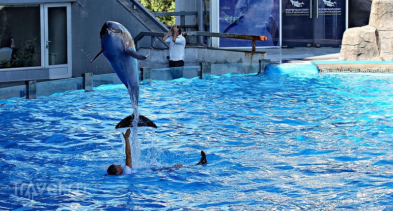 Посещение Батумского дельфинария / Грузия