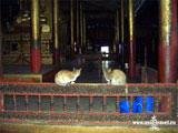 озеро Инле, храмовые кошки