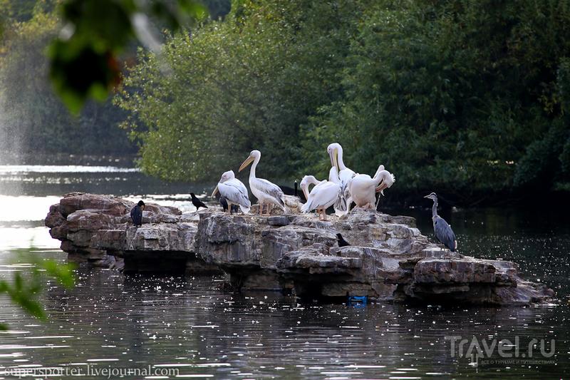 St James's Park / Фото из Великобритании