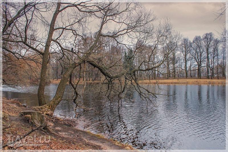 Природа Елагина острова / Россия
