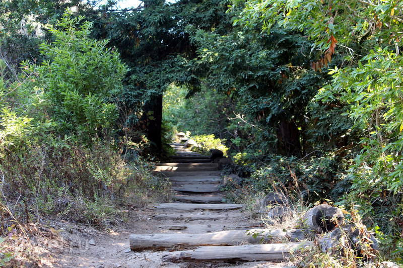 Garrapata. Еще одно сокровище / Фото из США