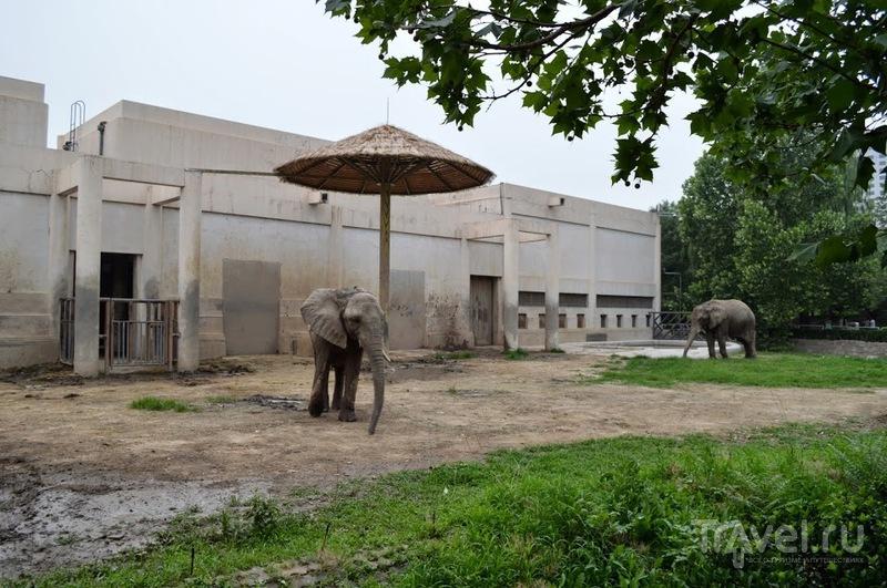 Пекин. Храм Неба, ламаистский храм Юнхэгун и Пекинский зоопарк / Китай