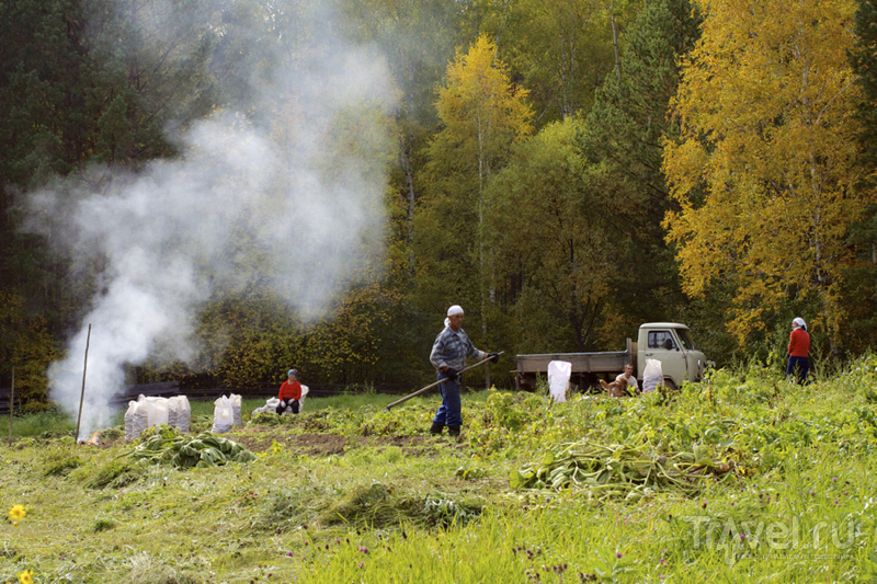 Колорит сибирской деревни / Фото из России