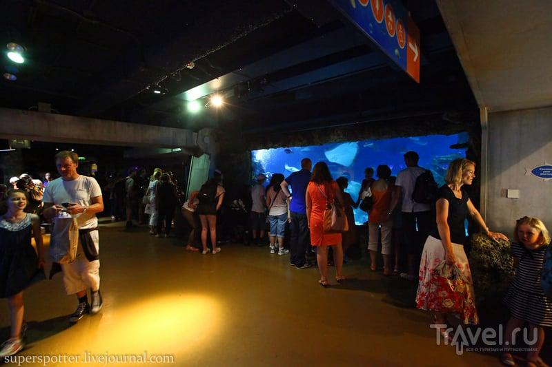 Sea Life London Aquarium / Великобритания