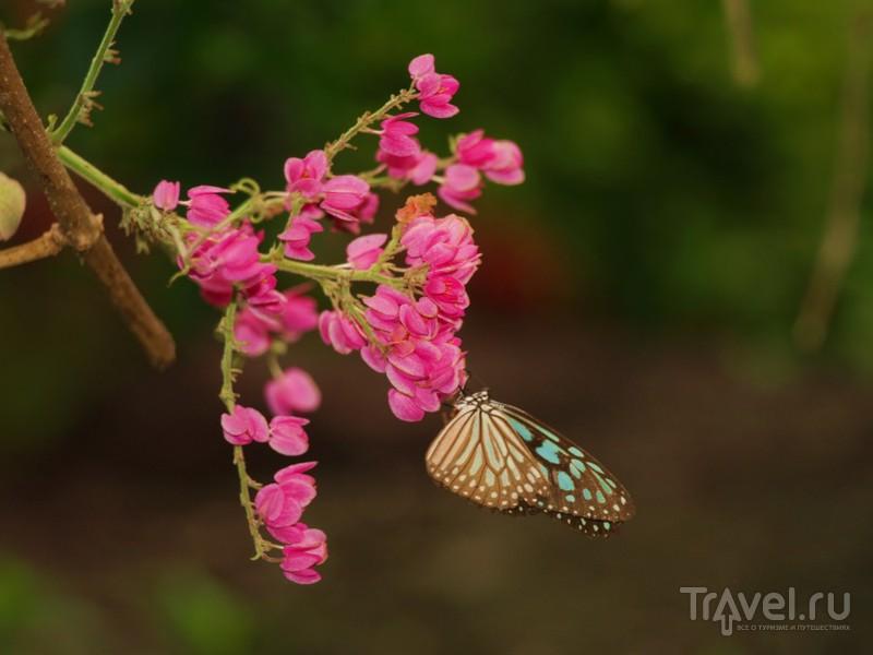 Новогодний Самуи / Таиланд