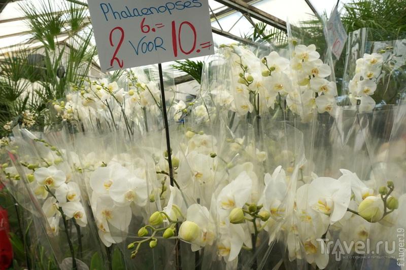 Цветочный рынок Bloemenmarkt в Амстердаме / Нидерланды
