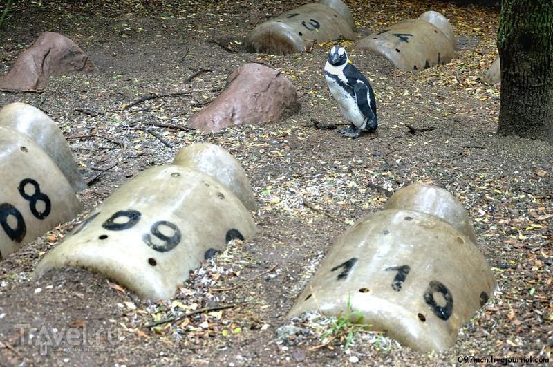 Южноафриканское сафари. Мыс Доброй Надежды / Фото из ЮАР