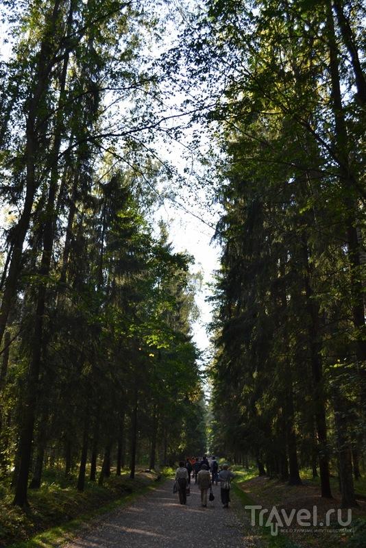 По-прежнему летний Павловск / Россия