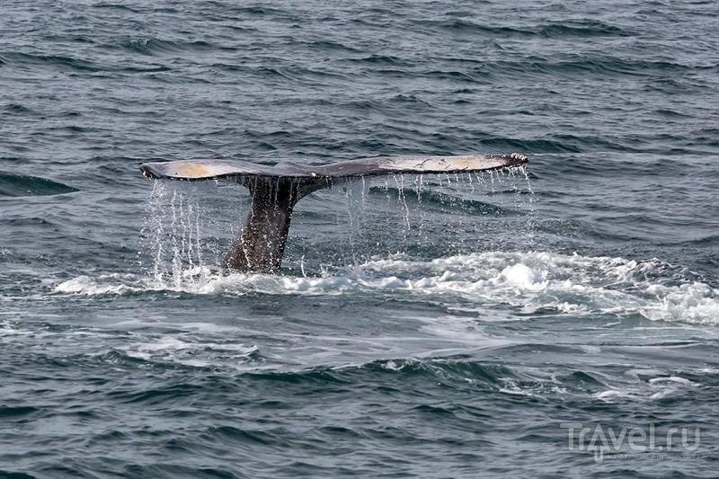 За горбатым китом / Фото из Исландии