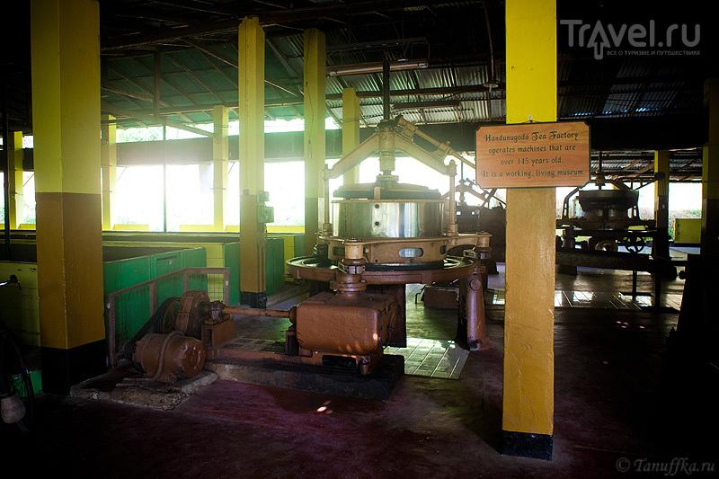Чайная фабрика Хандунугода / Фото со Шри-Ланки